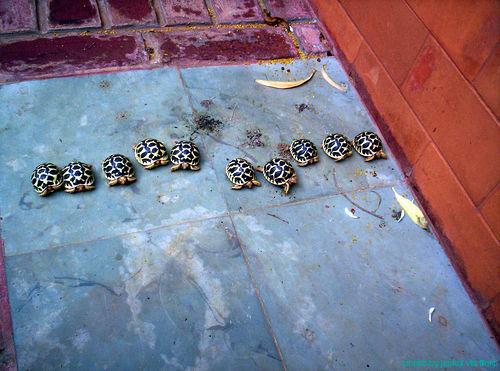 Tortoise_race